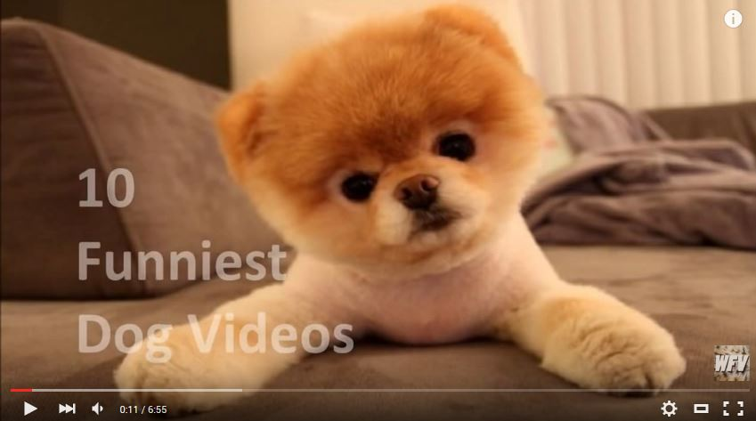 Chewy Cheese Dog Funny Cute Animal Videos Puppy Dog Videos